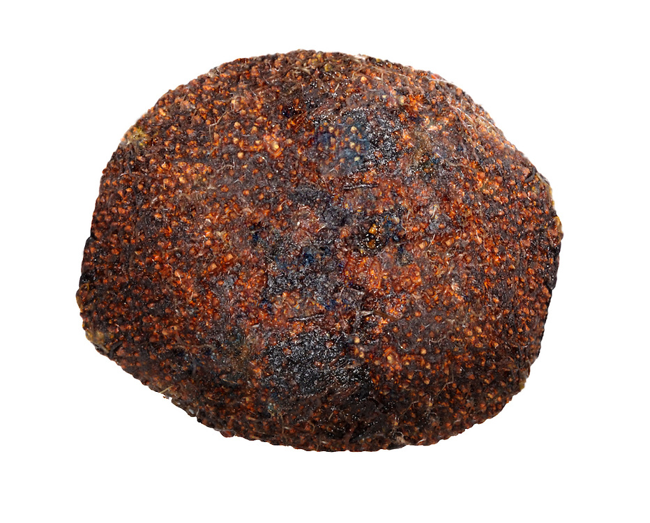 false truffle<br /> Elaphomyces granulatus