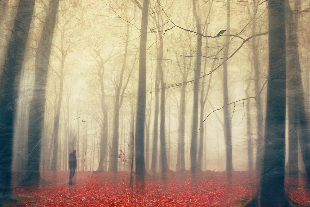 Man standing in an autumnly forest.<br /> Prints: http://society6.com/product/fog-radiance_Print