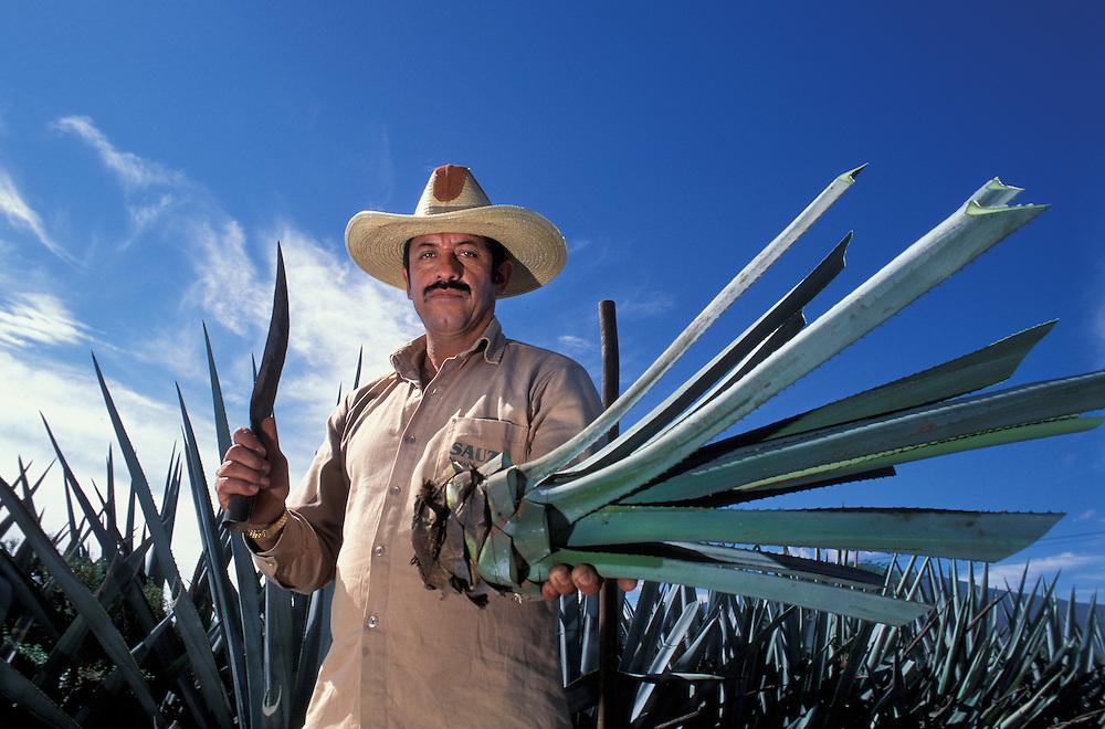 Agave harvest,Rancho Sauza Tequila Jalisco Mexico