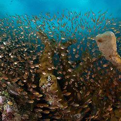 Dive Spot: Pulau Mioskon