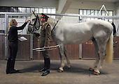 2013_05_02_horses_SSI