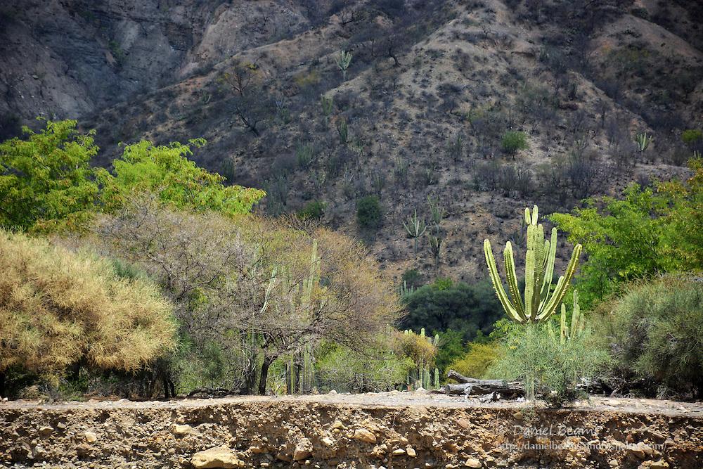 Landscape on the Mizque River in Santa Cruz, Bolivia