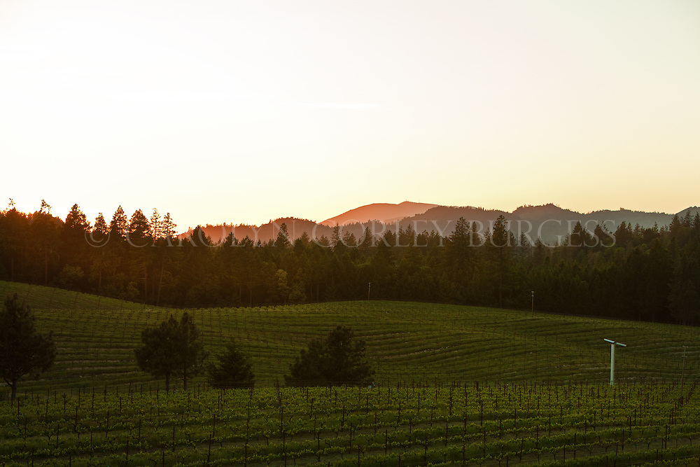 Sunset at Bancroft Ranch with a view of Mount Saint Helena in the background. Howell Mountain, Napa Valley