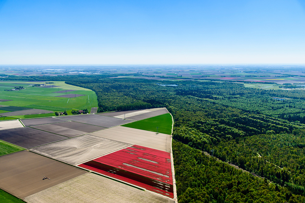 Nederland, Flevoland, Noordoostpolder, 07-05-2018; Kuinre, Kuinderbos en bollenvelden.<br /> Flower bulb fielsa and planted forest in new polder, North East Polder.<br /> <br /> luchtfoto (toeslag op standard tarieven);<br /> aerial photo (additional fee required);<br /> copyright foto/photo Siebe Swart