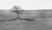 Lone tree with motion blur in black and white