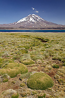 VOLCAN MAIPO Y YARETAS (Azorella compacta), RESERVA NATURAL LAGUNA DEL DIAMANTE, PROVINCIA DE MENDOZA, ARGENTINA
