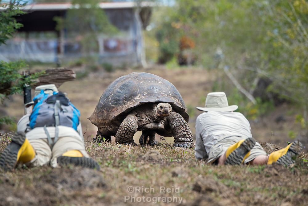 Photographer and Giant Galapagos Tortoise at El Manzanillo Ranch on Santa Cruz Island, Galapagos, Ecuador.