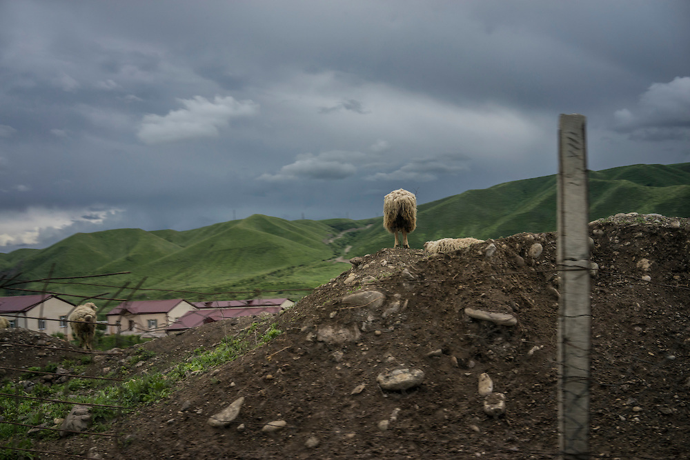 A sheep stands on a pile of dirt on Sunday, May 8, 2016 in Talish, Nagorno-Karabakh.