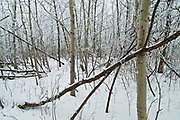 Winter in the Seine River Forest<br />