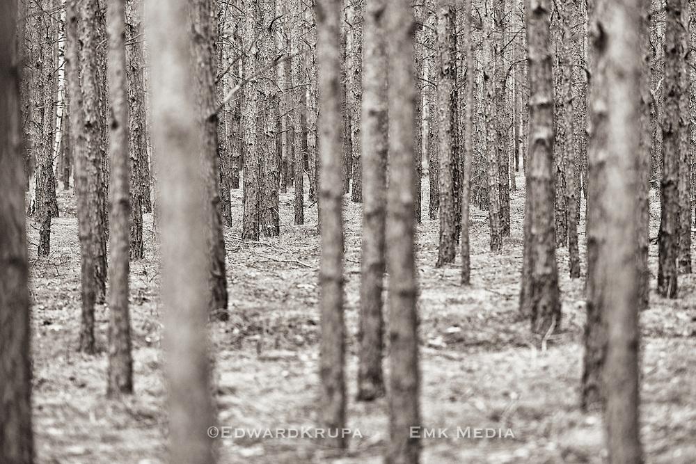 Zagan Pines 4
