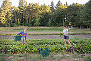 Shauna Beckstein and Tayne Reeves of Fiddlehead Farm