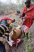 Noolkisaruni Tarakuai (center), the third of four wives of a Maasai chief, oversees the slaughter of her pregnant cow, which became critically bloated after it ingested plastic bags resulting in a 10 kilogram mass that obstructed it's digestive system. (Noolkisaruni Tarakuai is featured in the book What I Eat: Around the World in 80 Diets.)