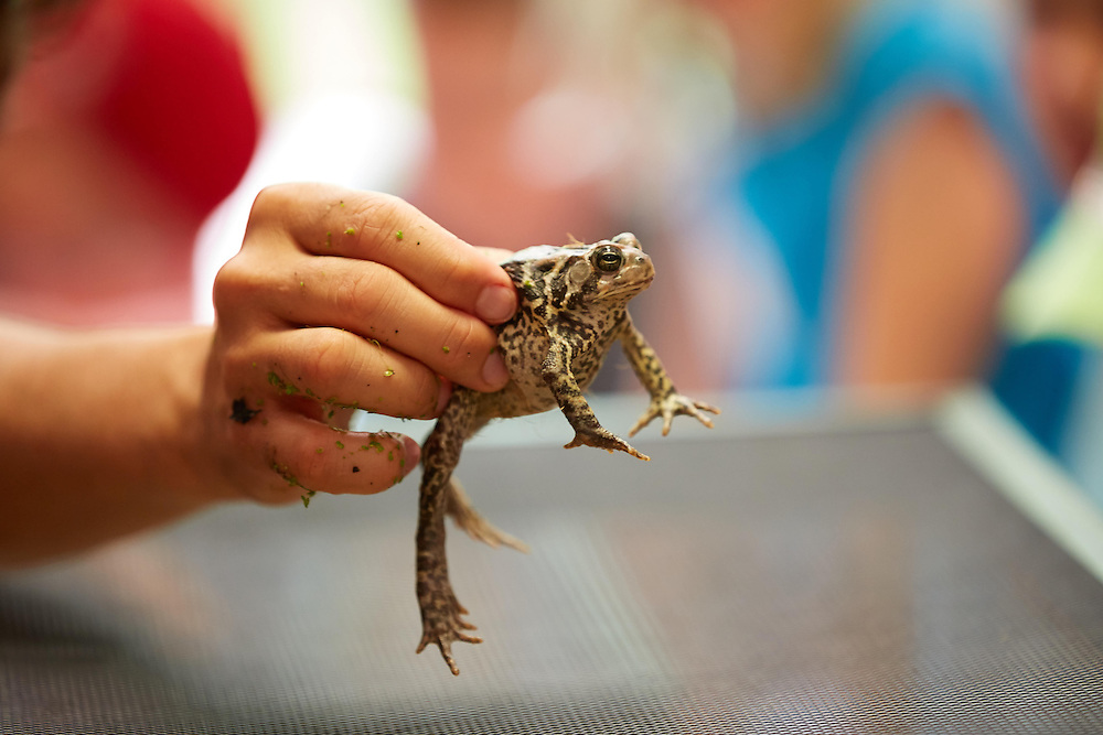 """Location; Inside; People; Student Students; Children; Summer; June; Time/Weather; day; Type of Photography; Candid; UWL UW-L UW-La Crosse University of Wisconsin-La Crosse; """"Continuing  Education USGS Reptiles Amphibians Frogs Snake turtle Randy Hines"""""""
