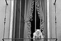 Mesagne, centro storico. Un gatto affacciato sul balcone di una casa