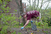 Ryan Weissinger of Theta Chi fraternity, removes cigaretts butts and other trash from the area surrounding Baker University Center as apart of Athens Beautification Day held on April 19.