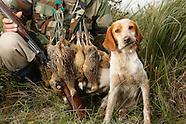 Argentina upland hunt