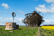 Windmill in paddock next to flowering canola crop in rural Mingay, Victoria, Australia. <br />