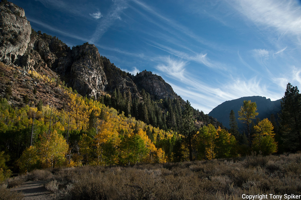 """June Lake Fall 2"" - The aspens begin to change along the June Lake Loop in the Eastern Sierras"