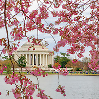 Historic Washington DC landmark photography image displaying the Thomas Jefferson Memorial at the Tidal Basin framed by beautiful Cherry Blossom.   <br />