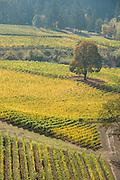 Aerial view over Alexana winery & estate vineyard, Dundee Hills, Willamette Valley, Oregon
