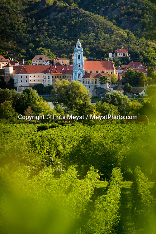 Durnstein. Danube, Lower Austria, September 2015.  Domäne Wachau is deeply rooted in the Wachau region. Close to 440 hectares of vineyards are cultivated by the members of this quality-oriented cooperative – that makes 30 percent of the entire Wachau vineyard area.  These vineyards are found on steep terraces reinforced by old dry stone walls and are part of a World Cultural Heritage. The pretty town of Dürnstein, on a supple curve in the Danube, is not only known for its beautiful buildings but also for the castle above the town where Richard I (the Lionheart) of England was once imprisoned. Austria's most spectacular section of the Danube is the dramatic stretch of river between Krems an der Donau and Melk, known as the Wachau. Here the landscape is characterised by vineyards, forested slopes, wine-producing villages and imposing fortresses at nearly every bend. The Wachau is today a Unesco World Heritage site, due to its harmonious blend of natural and cultural beauty. Photo by Frits Meyst / MeystPhoto.com