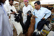 Livestock Souq. Bargaining for goats.
