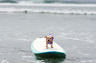 Paco drifts aimlessly after a wave carried him away from his owner.