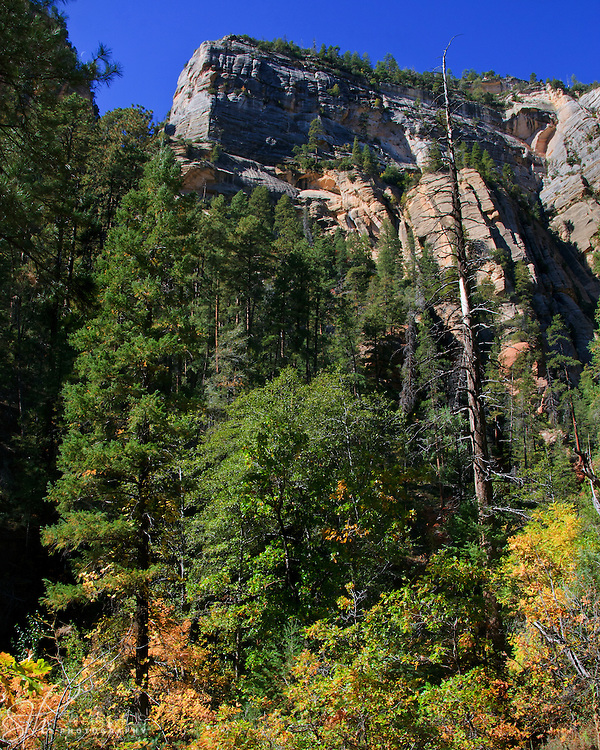 Towering trees and rocks along the West Fork Trail - Oak Creek Canyon, AZ