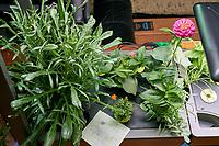 Farm 04 - Left (Day 42). F04L01 Plug; F04L02 Cosmos Dwarf; F04L03 Cosmos Early Dwarf; F04L04 Pug; F04L05 Zinnia Thumbelina; F04L06 Zinnia Lilliput;  F04L07 Blue Cornflower; F04L08 Plug; F04L09 Plug; F04L10 Marigold; F04L11 Marigold; F04L12 Plains Coreopsis.  Image taken with a Leica TL-2 camera and 35 mm f/1.4 lens (ISO 640, 35 mm, f/8, 1/80 sec).