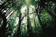 Rain forest seen from below.