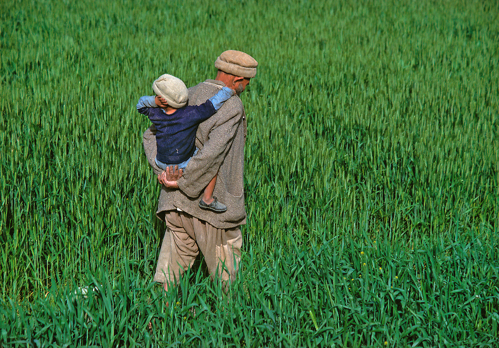A father carries his son through the tall grasses of Chitral, in Khyber Pakhtunkhwa, Pakistan.
