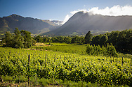 Morning in the vineyards, Franschhoek Valley, South Africa. http://www.gettyimages.com/detail/photo/vineyards-franschhoek-south-africa-royalty-free-image/97936149