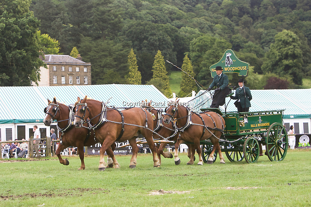 Randy Hiscock driving his own Suffolk Punches<br /> 4th  Team Turnouts
