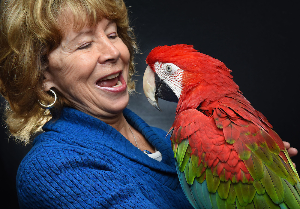 Photo by Mara Lavitt -- Special to the Hartford Courant<br /> March 21, 2015, Middletown<br /> The eighth FeatherFest was held in Middletown by the Connecticut Parrot Society providing visitors with education about parrots and other birds. Barbara Cosgrove of Southington, with her green-winged macaw, Emily. In 2006 Cosgrove founded the CT Parrot Society with her husband Bob. Because of the long lives of the parrots the Cosgroves have made provisions for them in their wills.