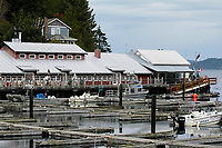 Boats and dock, Telegraph Cove , British Columbia, Canada Photo: Peter LLewellyn