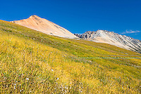 Late summer meadows below Ochre Mountain 2530 m (8301 ft) Coast Mountains British Columbia Canada