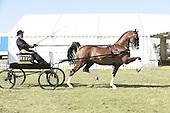 Class 31 - Hackney Horse