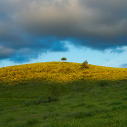 Two trees atop a grassy hill. Orange County, CA.