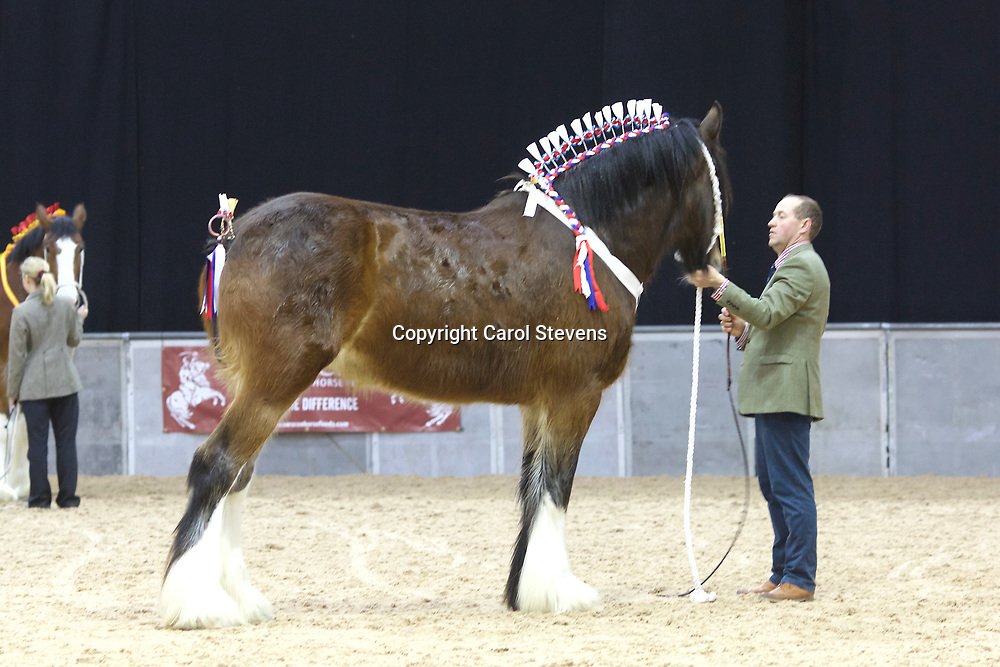 F W Richardson &amp; Son's BEWHOLME MOONLIGHT SERENADE  f 2013  (No.162)<br />