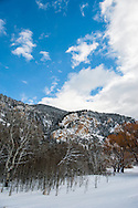 Aspen (Populus tremuloides) grove, Paradise Valley, south of Livingston, Montana,.PROPERTY RELEASED.