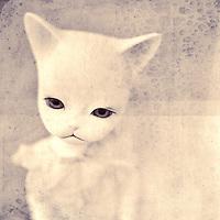 pink munchkin cat