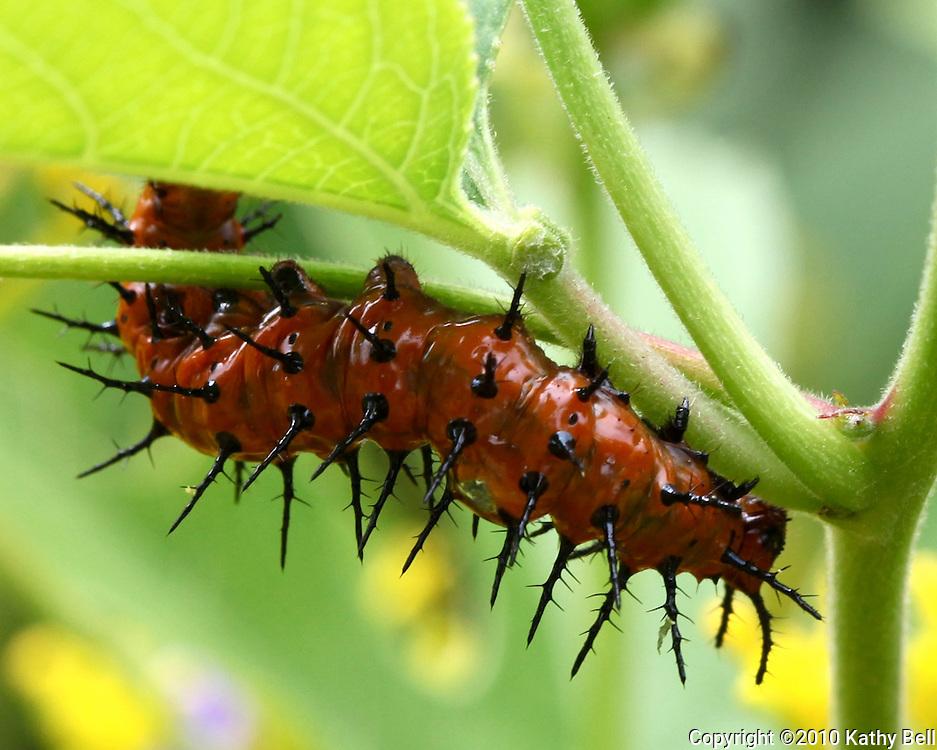 Image of a caterpillar