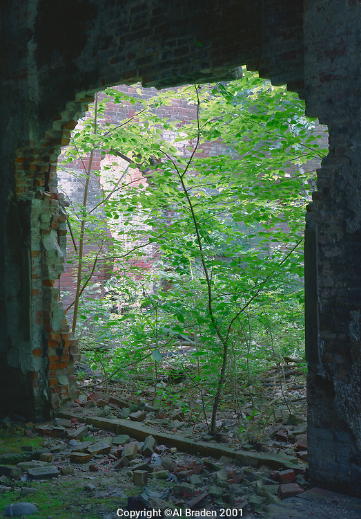 Re-growth in industrial ruins at Bellows Falls, VT