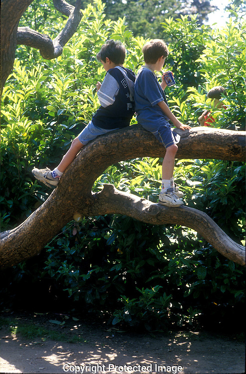 Two young boys relaxing up a tree.