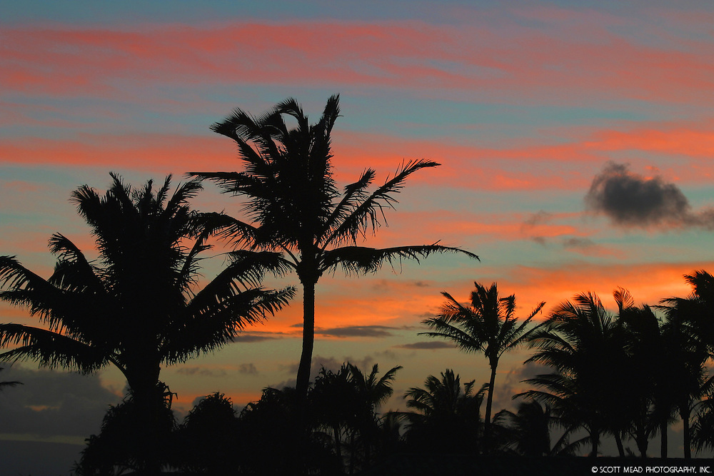 Silhouette of palms trees during twilight sunset from West Maui, Hawaii