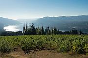 Celilo Vineyards, Columbia River Gorge AVA, Washington
