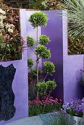 Cupressocyparis leylandii 'Castlewellan' clipped as cloud topiary. Reflections Garden. Designer: David Domoney - Chelsea 2005