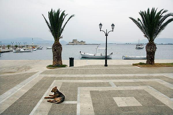 Griekenland, Nafplion, 10-7-2008Hond ligt op straat te slapen. In Griekenland zijn overal zwerfhonden, vaak in een roedel. Ze worden veelal met rust gelaten en soms gevoed. Ze zijn vast onderdeel van het straatbeeld.Foto: Flip Franssen