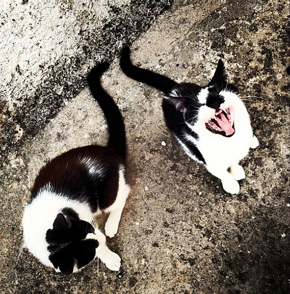 Ventotene 2012: Cats grimacing.