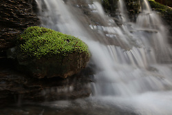 Spring Flowers on Indian Creek with David Coyle, Tuesday, March 27, 2012 at Indian Creek in Red River Gorge.